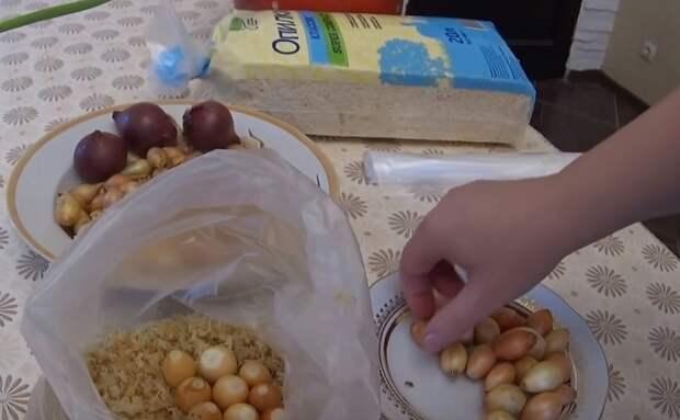 как выращивать лук репчатый