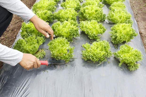 Шесть советов по эффективной борьбе с сорняками
