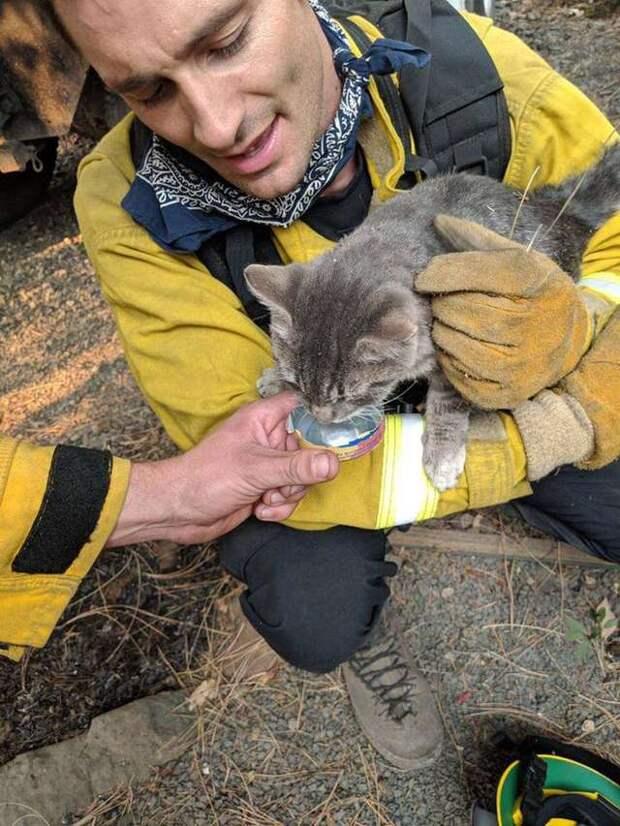 Пожарные спасли кота от пожара. Теперь тот от них - ни на шаг