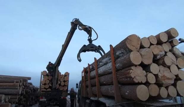 Спасти российский лес: власть борется с вырубками или делает вид?