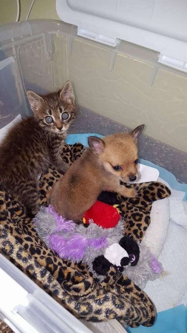 Котенок и щенок так подружились, что произошло чудо: больной щенок — пошел на поправку
