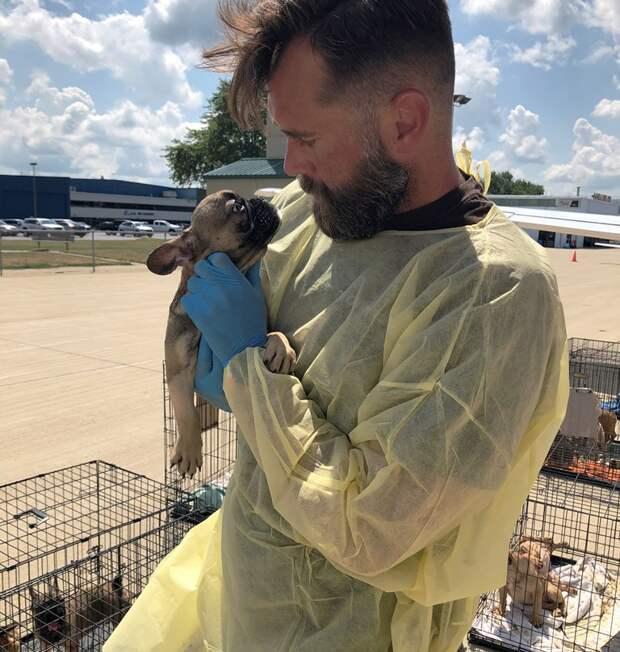 В Техасе спасли щенков французского бульдога, привезенных из Украины и содержащихся в ужасных условиях