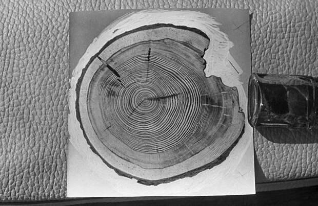Тайна века: чем был Тунгусский метеорит