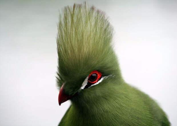 Birds_14 (700x498, 135Kb)