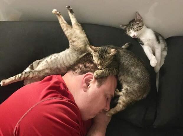 Эти 10 очаровательных котят могут спать в любой позе, и это супер мило