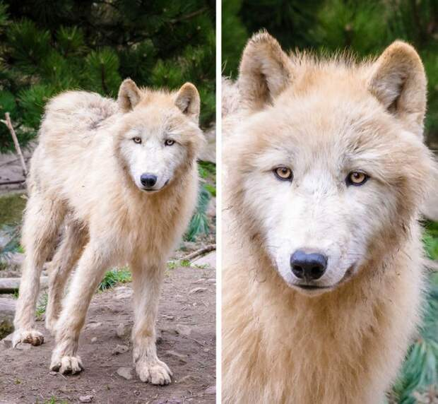 20 животных, для окраса которых природа включила режим «шальной императрицы»