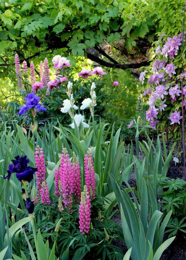 Ароматы вечернего сада! Лучшихе сорта душистых цветов