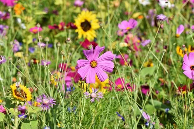Фестиваль «Цветочный джем» пройдет в парке на Угличской