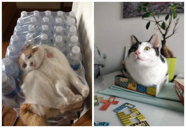 22 фото, доказывающих, что коты могут поместиться куда угодно