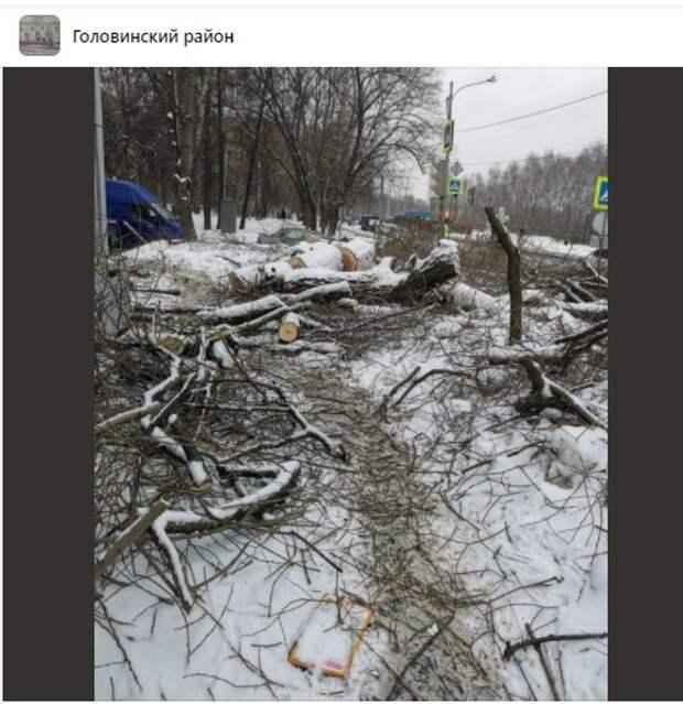 Деревья  в Головинском спилили по рекомендации дендрологов
