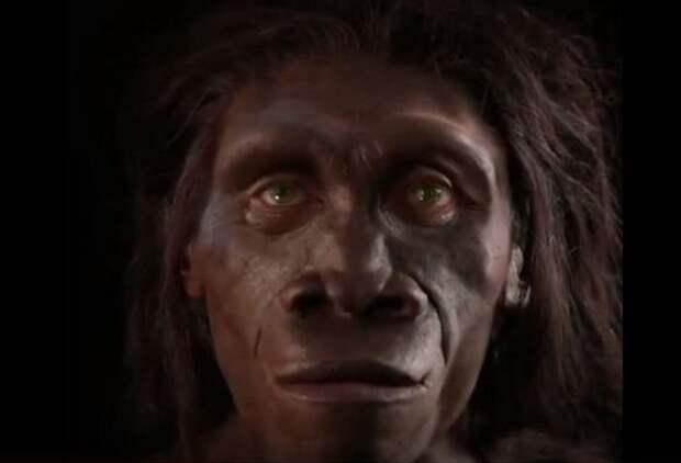 6 миллионов лет за 1 минуту: как изменялось лицо человека