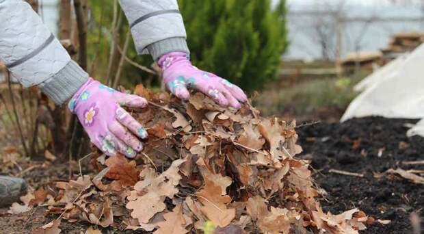 Листовой опад из леса