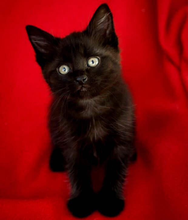 Пятничный котенок Майк