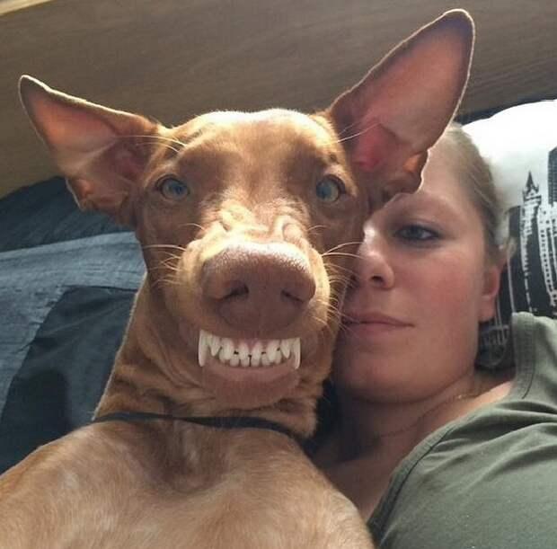 29 самых популярных селфи собак, которые потрясли весь мир селфи, собака