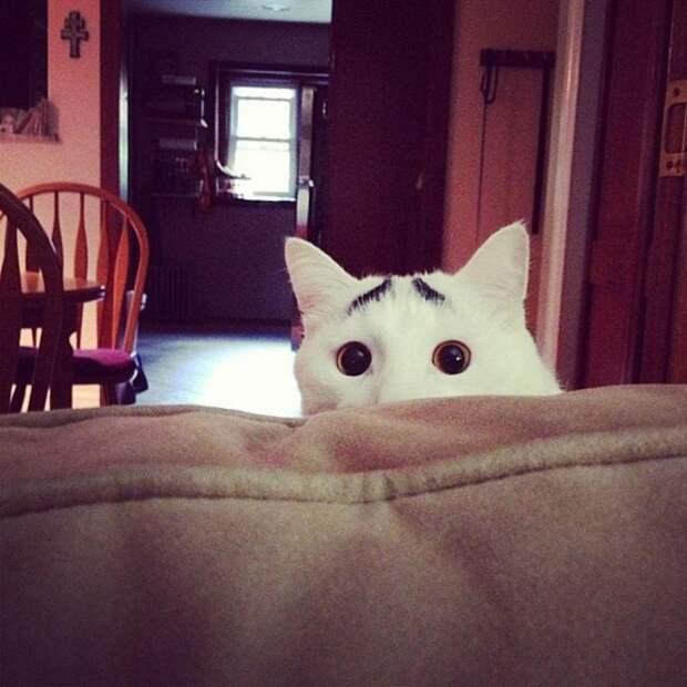 15 котов - звёзд интернета