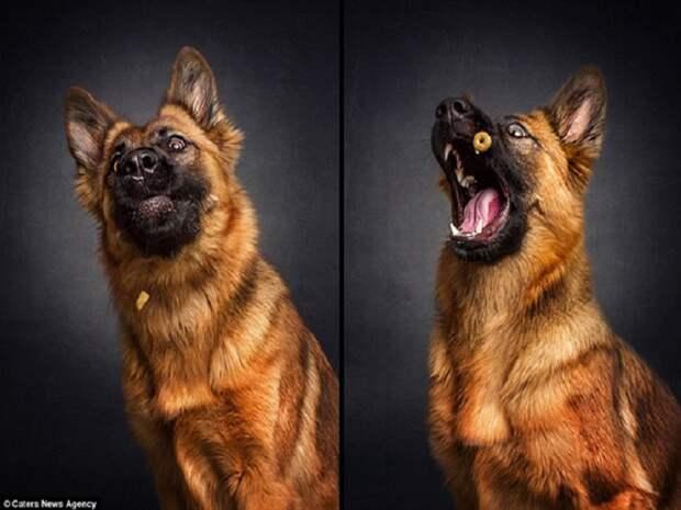 10 зворушливих моментів, коли собака виглядає емоційно - фото 5
