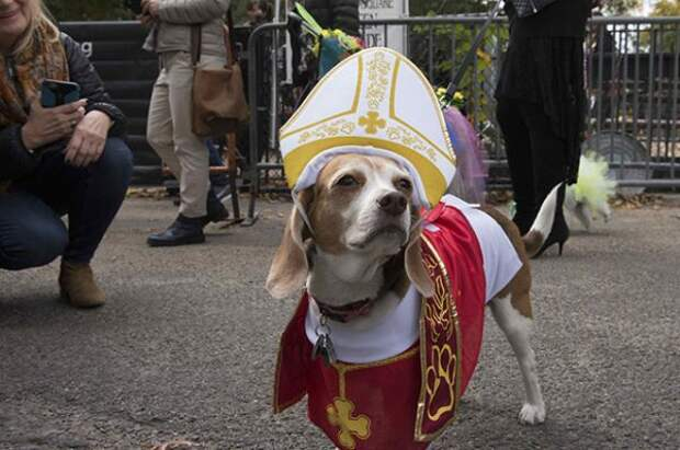 «Собачий парад» в Нью-Йорке