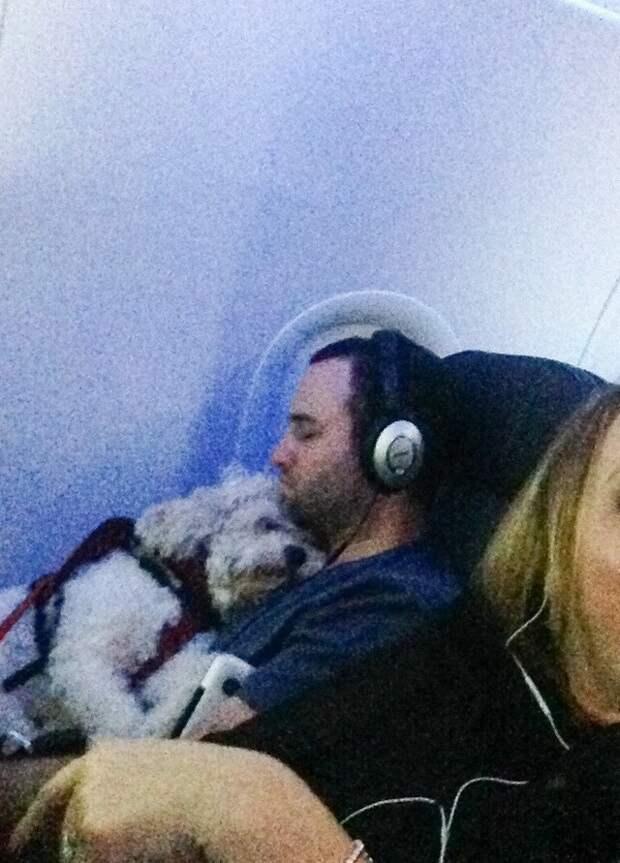 19. ...слишком приятны животные, пассажир, салон, самолет, собака, фотография