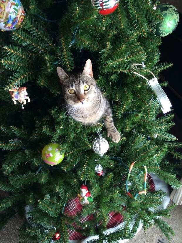 37. Живое украшение  елка, кошка, подборка