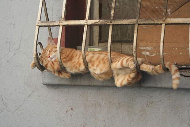 32. Коты могут спать где угодно животное, сон