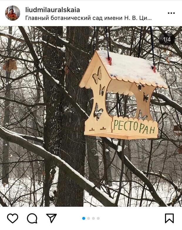Фото дня: в Ботаническом саду появился ресторан для птиц