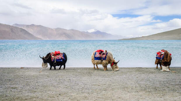 Озеро Пангонг Цо в Гималаях. Автор фотографии: Юсуф Чинивала (Yusuf Chiniwala).