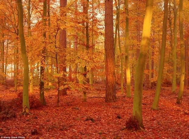 Золотые краски осени в пейзажах Великобритании