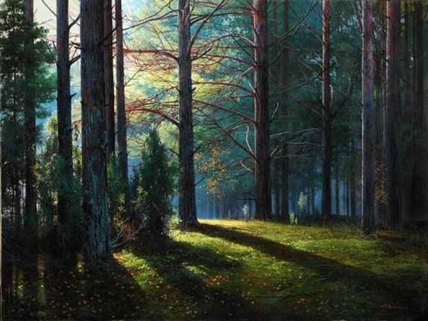 Лучи соснового леса