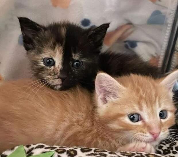 Иногда агрессия и не нужна – история двух котят-сестричек