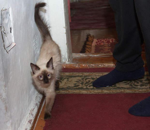 Под ногами мешаются котэ деревня, животные, история, коты