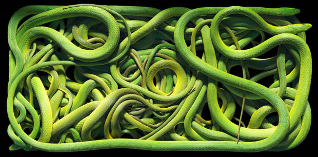 Зеленые змеи