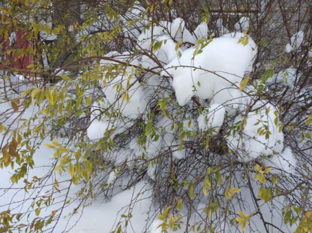 Синоптики рассказали, когда на Кубани прекратятся снегопады