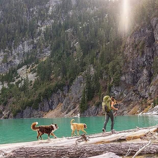 Хотите путешествовать? Возьмите с собой пса!