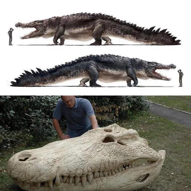 Пурусзавр — гигантский кайман прошлого Крокодил, Палеонтология