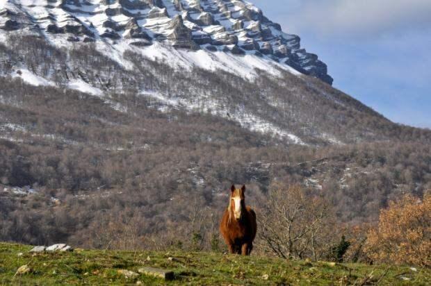 Дикие лошади в Испании