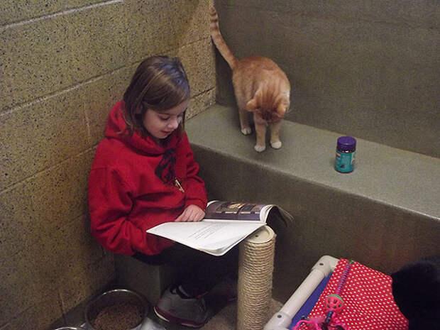 reading-children-shelter-cats-book-buddies-8