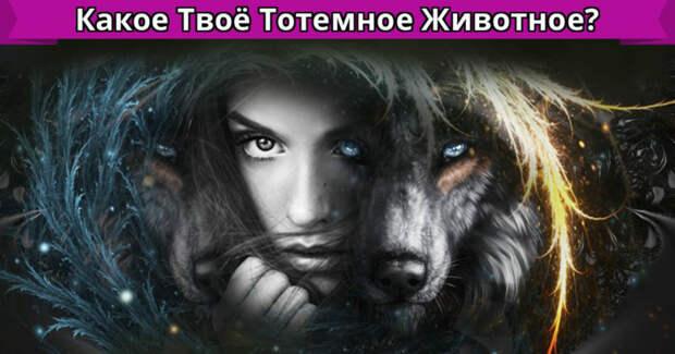 Тотемные животные: к какому клану ты принадлежишь? 3 версии