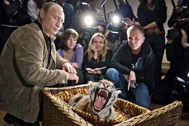 Коза, тигрица, конь и собаки Владимира Путина бизнесмен, животные, политик, факты