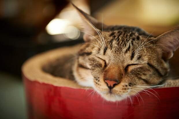 Долгий сон в выходные опасен для здоровья