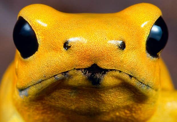 http://www.dutch-rana.nl/v2/images/stories/dendrobatidae/41.jpg