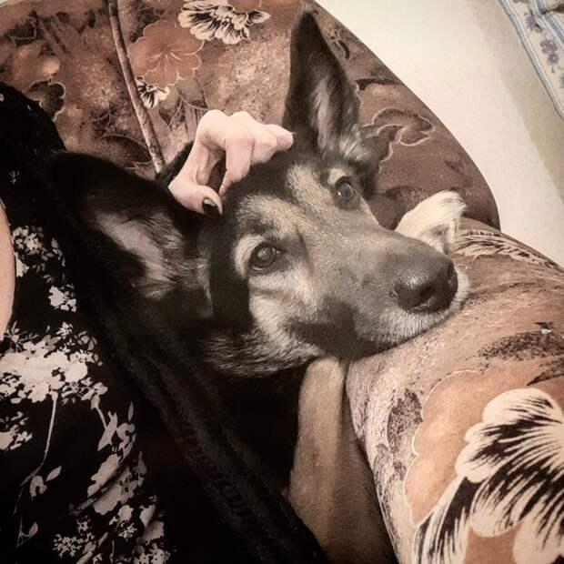 «Передержка вышла из-под контроля!» — говорит девушка, которая спасла щенка и уехала вместе с ним в Москву