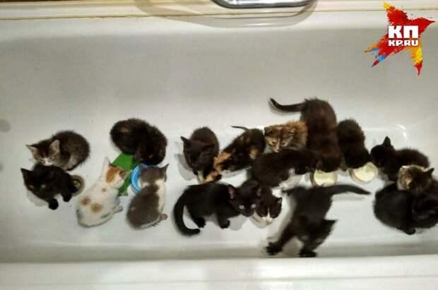 Уралец нашел целую коробку с котятами Фото: Андрей Горшунов