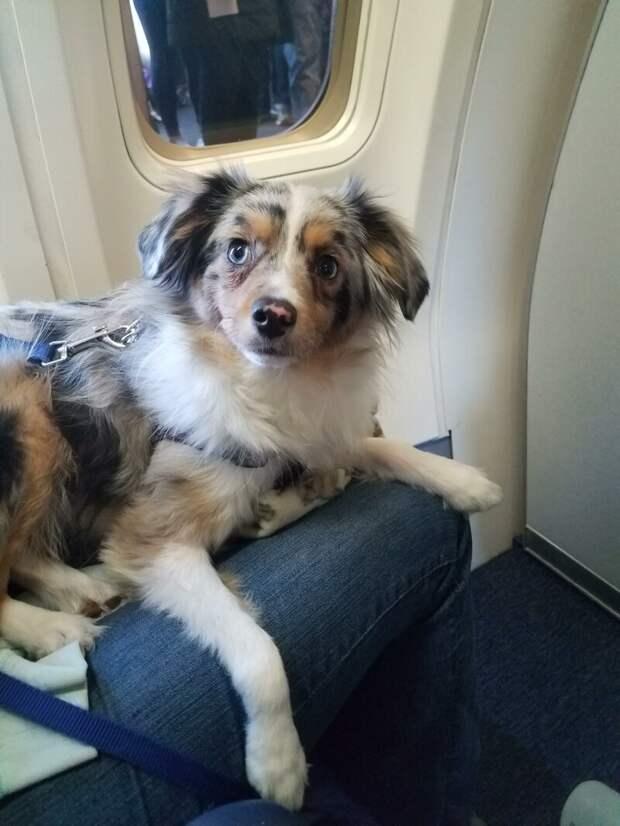 14. Да-да, этот добрый взгляд... животные, пассажир, салон, самолет, собака, фотография