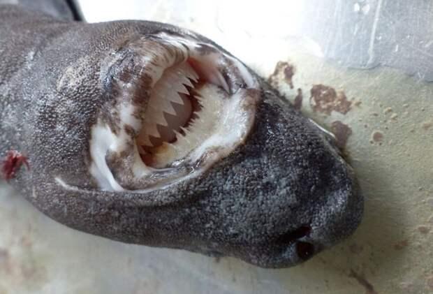Альбатроса, целиком проглотившего акулу, поместили в музей