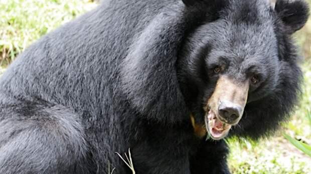 Частный приют для гималайских медведей открыли в Приморье