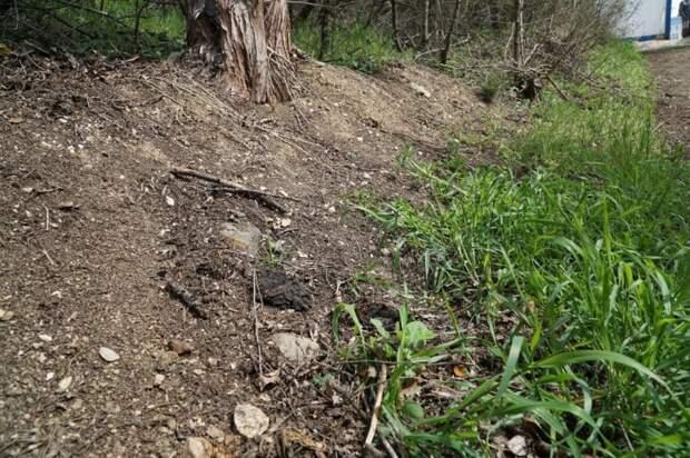 После приезда комиссии Совета министров застройщик начал убирать территорию Форосского парка