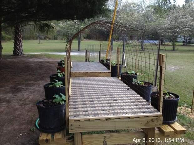 Выращивание огурцов на арке