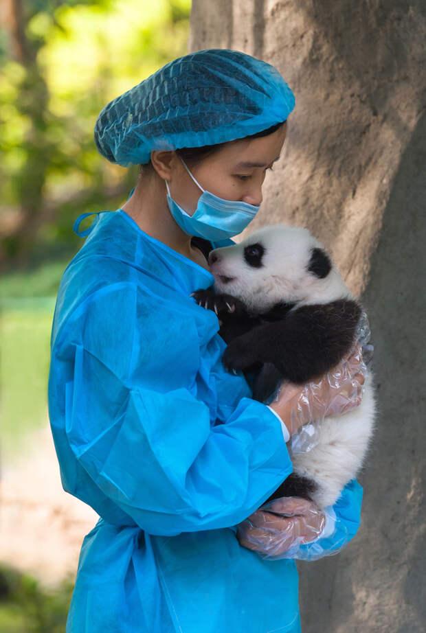 Самая лучшая работа на свете - обнимальщик панд