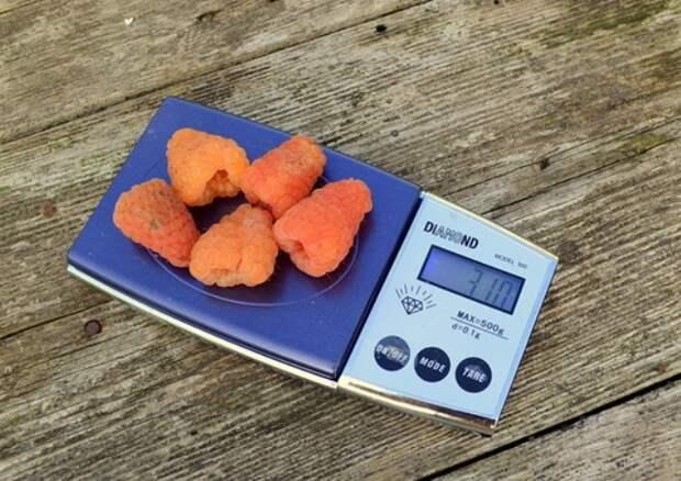 Ягоды ремонтантной малины Оранжевое чудо фото