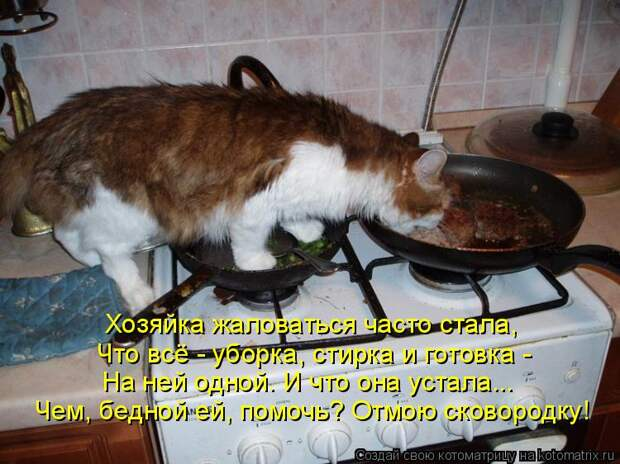 Котоматрица: Хозяйка жаловаться часто стала, Что всё - уборка, стирка и готовка - На ней одной. И что она устала... Чем, бедной ей, помочь? Отмою сковородку!